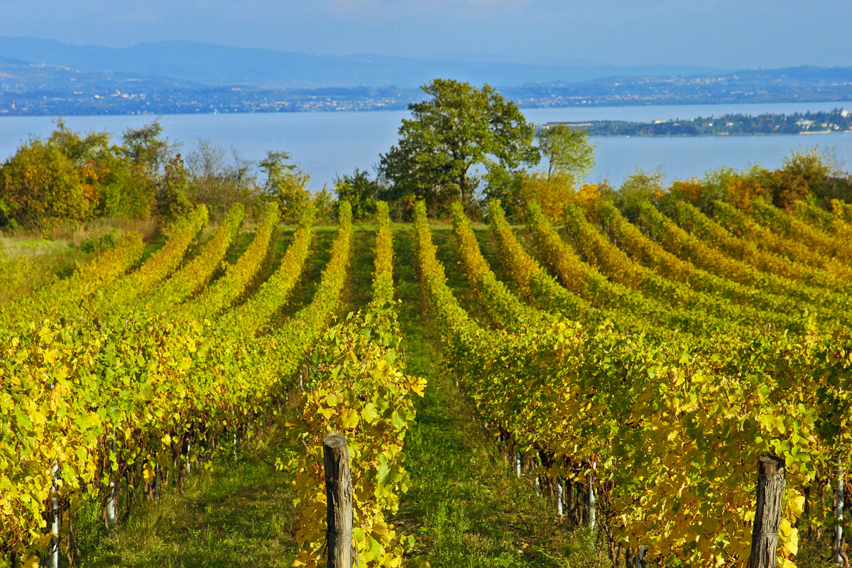 Lac de Garde, le prix du vin